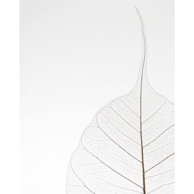 Blad Natuur - Eenvoud - Plant - Poster 40 x 50 cm