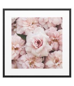 Schilderij Pioenrozen Bloemen - Rozen - Romantisch
