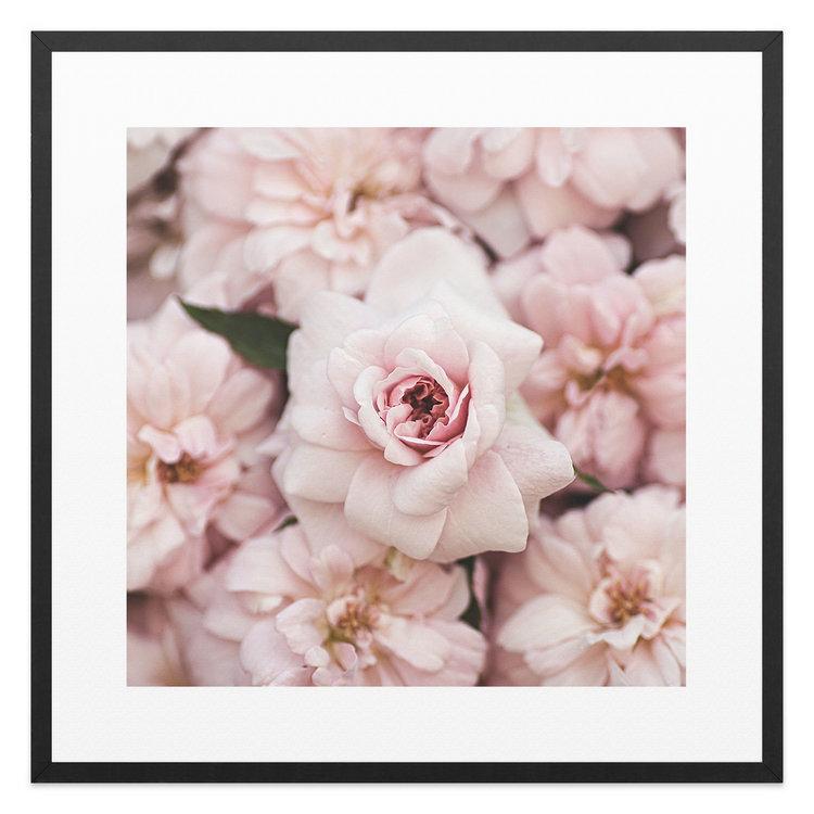 Pioenrozen Bloemen - Rozen - Romantisch - Schilderij 53 x 53 cm