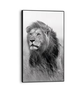 Print in baklijst Leeuw op Savanne Dierenkop
