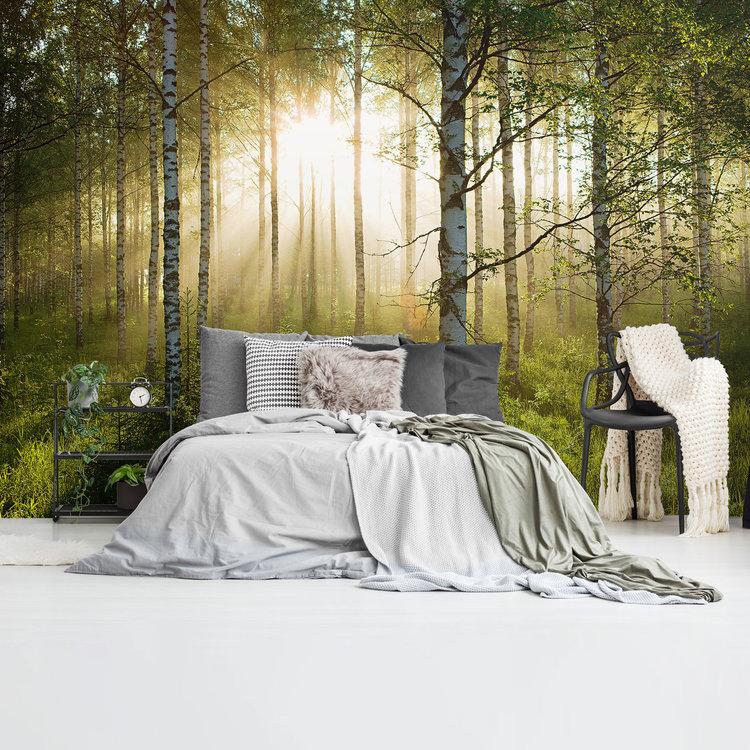 Zonnestralen in berkenbos Bos - Natuur - Stilte - zonsopkomst  - Fotobehang 384 x 260 cm Vlies