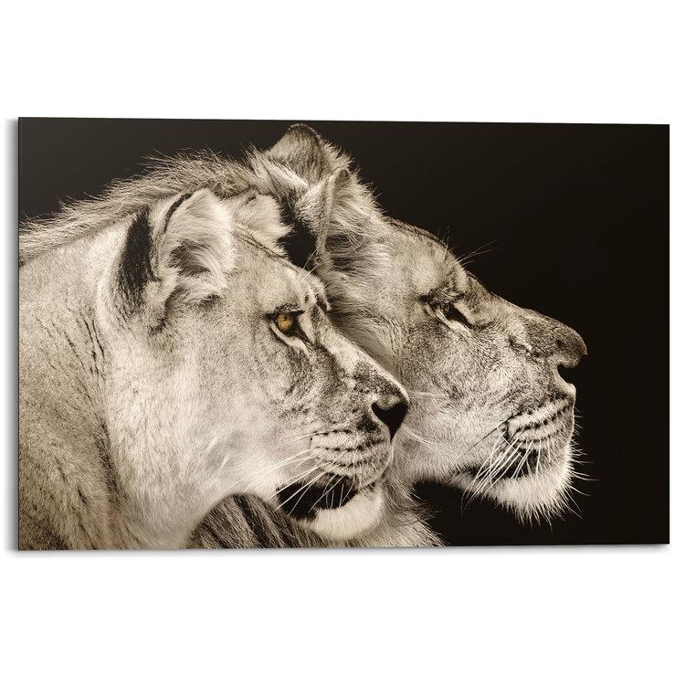 Leeuw en leeuwin Roofdieren - Leeuwenkop - Zijportret - Schilderij Deco Panel MDF 90 x 60 cm
