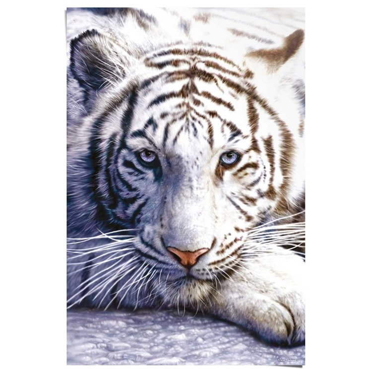 Witte tijger  - Poster 61 x 91.5 cm