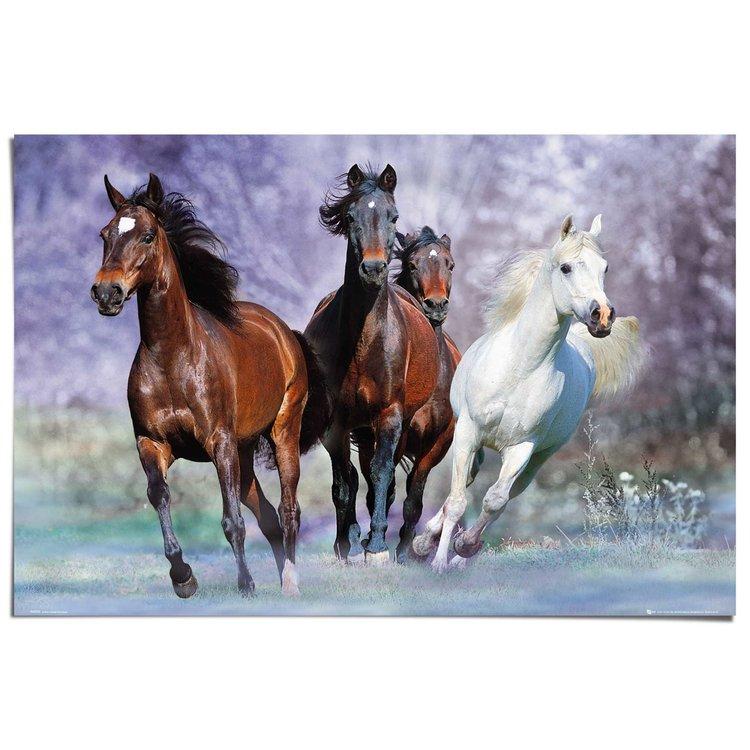 Paarden Dier - Galop - Paardenrassen - Fotografie - Poster 91 x 61 cm
