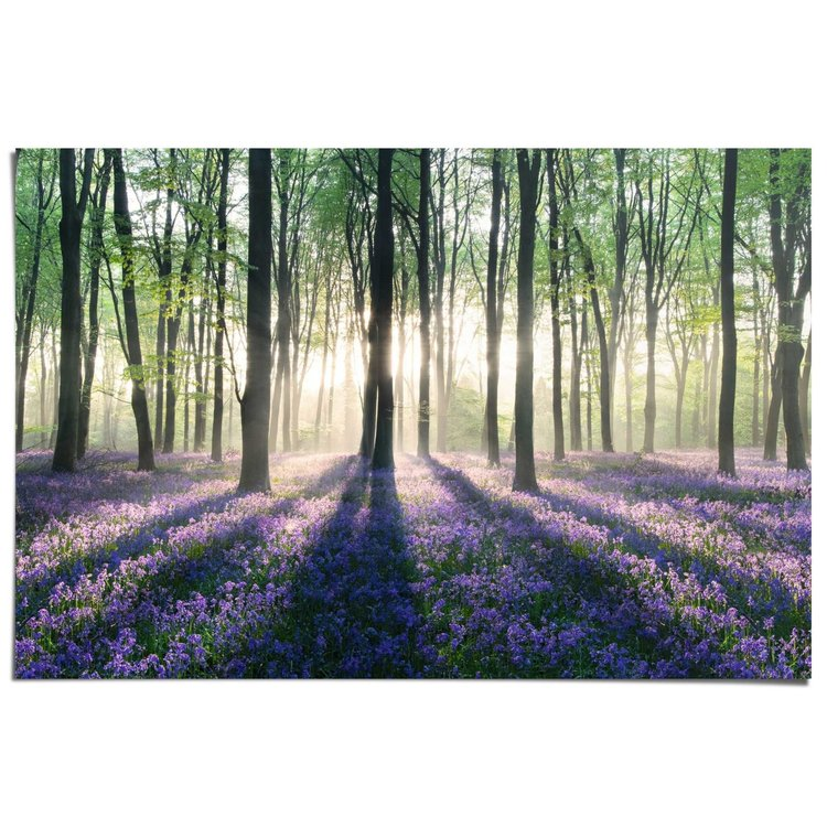 Bos met zonnestralen  - Poster 91.5 x 61 cm