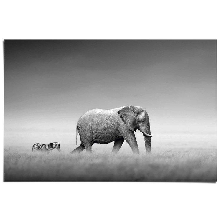 Olifant & zebra  - Poster 91.5 x 61 cm