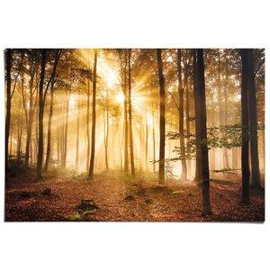 Poster Herfstbos met zonnestralen.