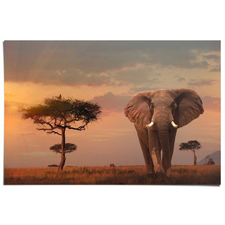 Olifant bij schemer  - Poster 91.5 x 61 cm