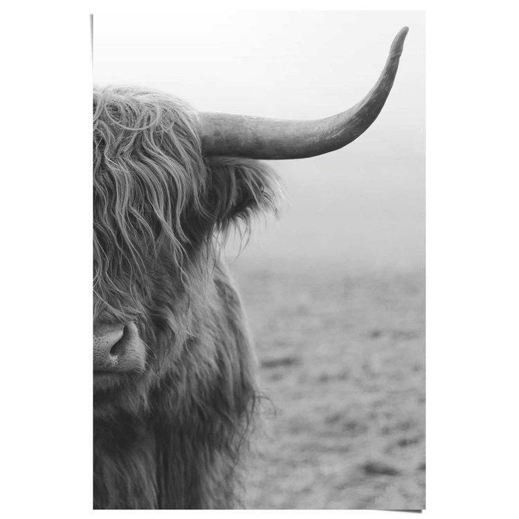 Schotse Hooglander  - Poster 61 x 91.5 cm