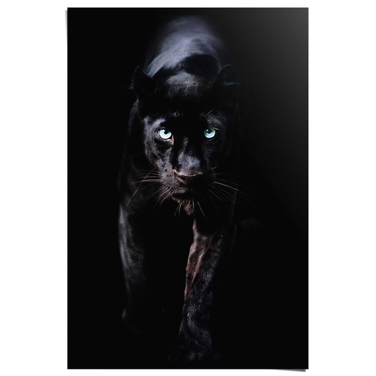 Zwarte Panter  - Poster 61 x 91.5 cm