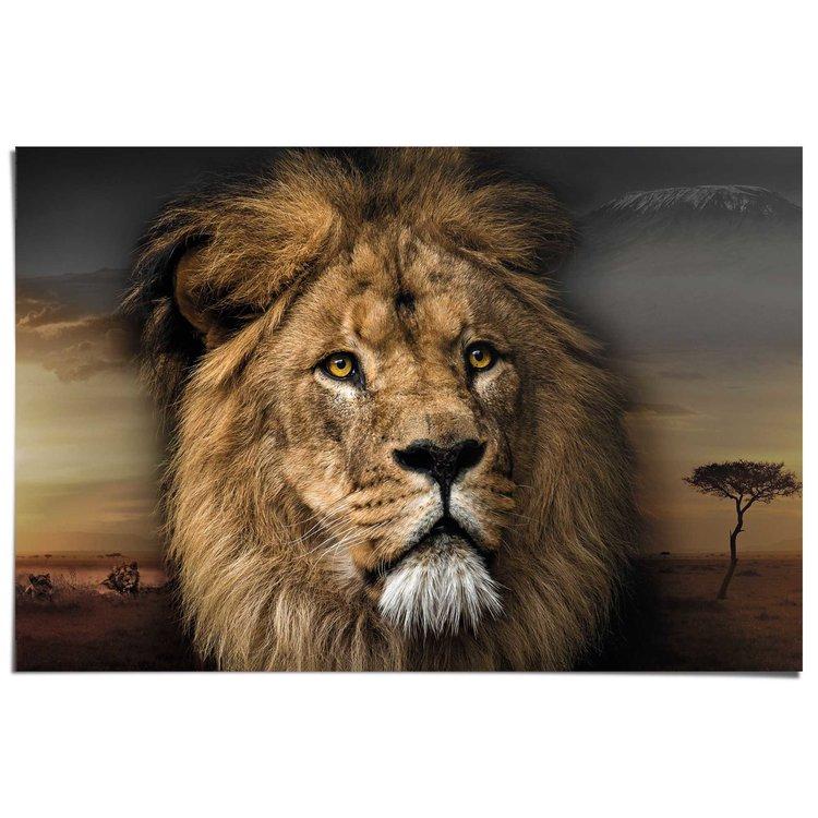Leeuwenkop  - Poster 91.5 x 61 cm