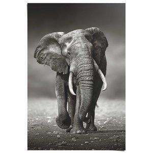 Poster Lopende Olifant