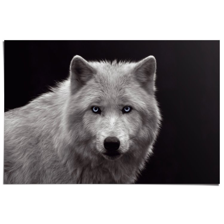 Witte Wolf - Poster 91.5 x 61 cm