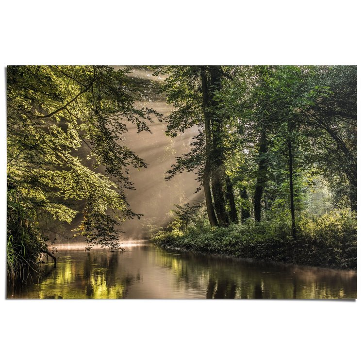 Beek in het bos - Poster 91.5 x 61 cm