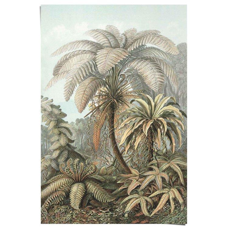 Filicinae Ernst Haeckel Jungle - Poster Papier 61 x 91.5 cm