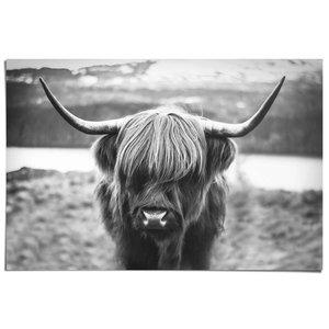 Poster Schotse Hooglander Stier Rund met hoorns