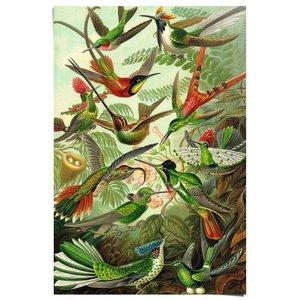 Poster Kolibries Ernst Haeckel Kunstformen der Natur