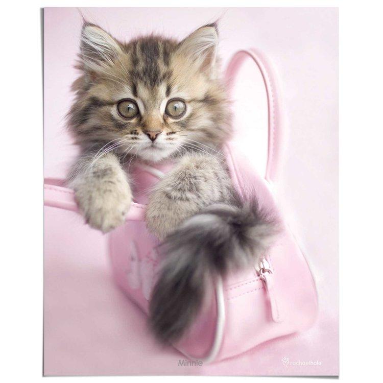 Kitten - Poster 40 x 50 cm