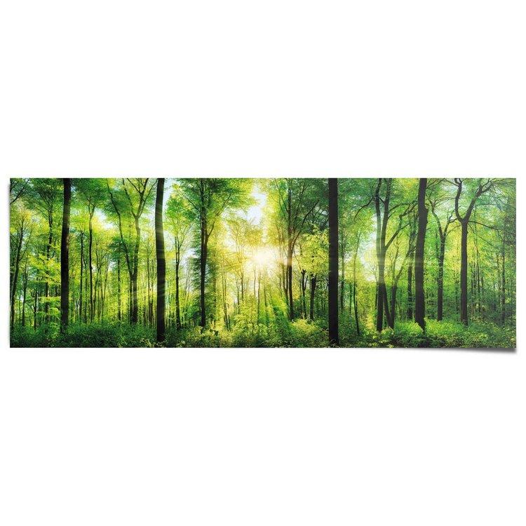 Bos in zonneschijn  - Poster 158 x 53 cm