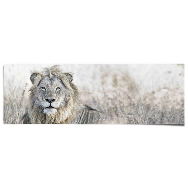 Leeuw - Poster 158 x 53 cm