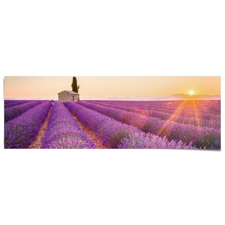Poster Provence lavendelveld - Poster 158 x 53 cm