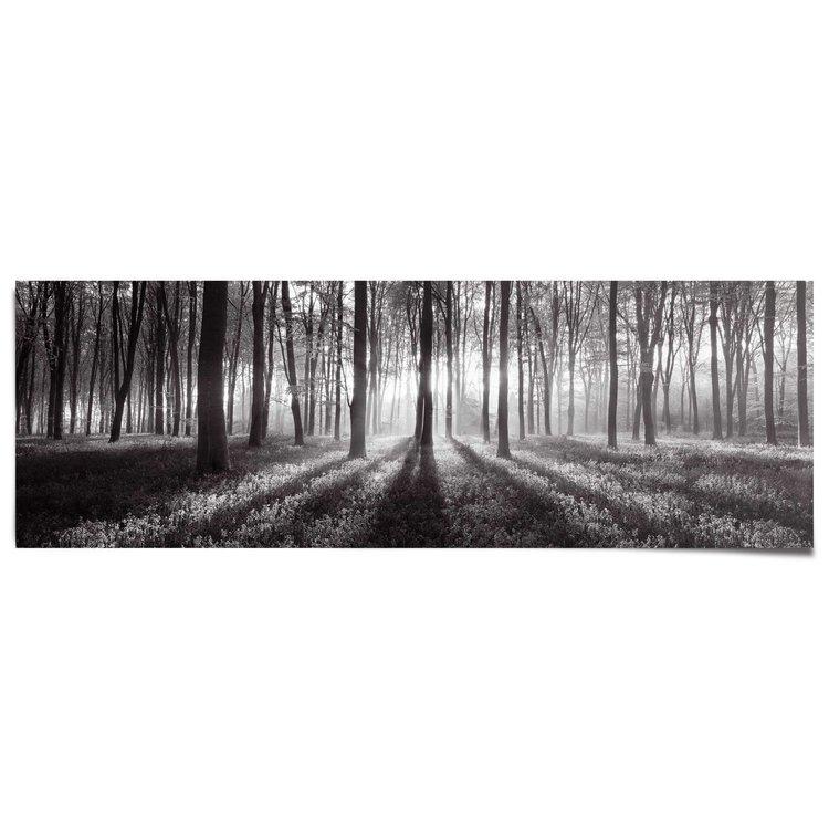 Bos Zonnestralen Zwart Wit - Poster 53 x 158 cm