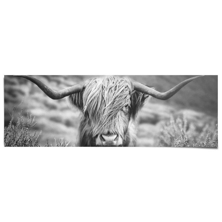 Schotse Hooglander Highlander - Stier - Portret - Fotografie - Poster 158 x 53 cm Papier