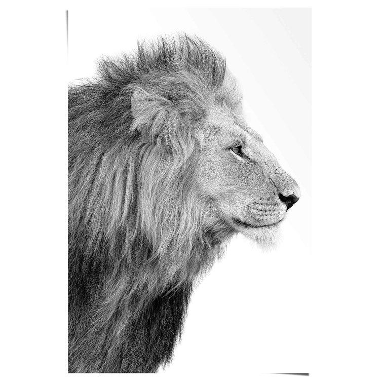 Leeuw Koning - Jungle - Krachtig - Zijaanzicht  - Poster 61 x 91.5 cm Papier