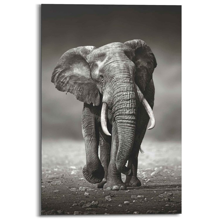 Lopende Olifant  - Schilderij 60 x 90 cm
