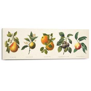 Schilderij Fruit Illustratie