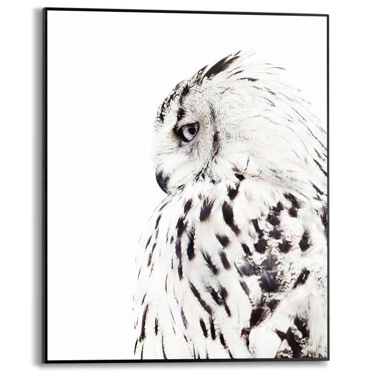 Uil Portret - Fotografie - Schilderij Slim Frame MDF 40 x 50 cm