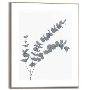 Schilderij Eucalyptus