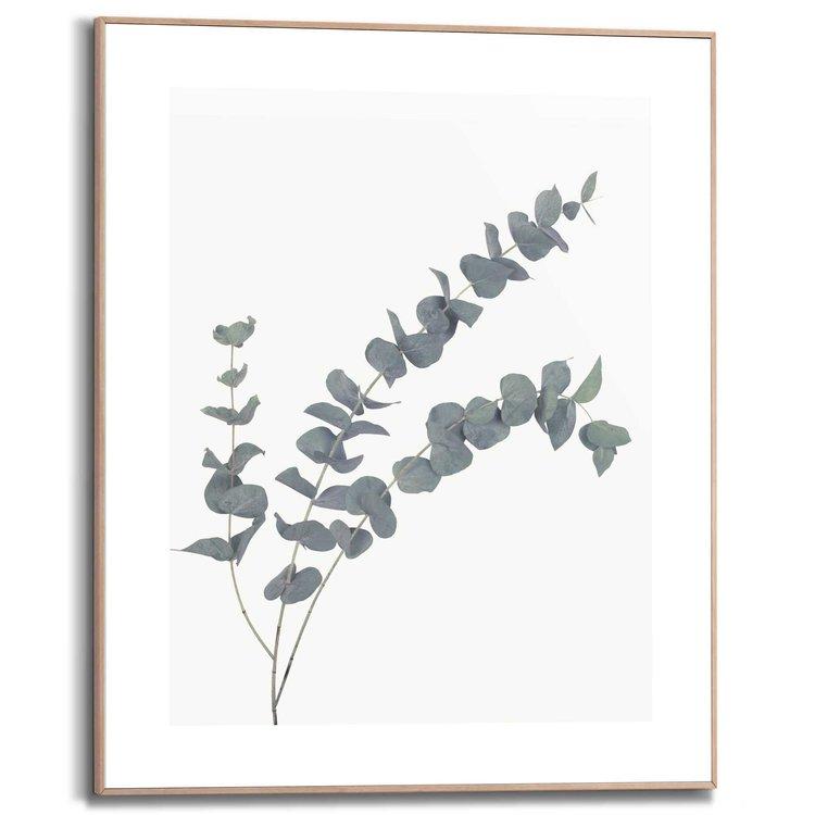 Eucalyptus Tak - Plant - Natuur - Schilderij Slim Frame MDF 40 x 50 cm