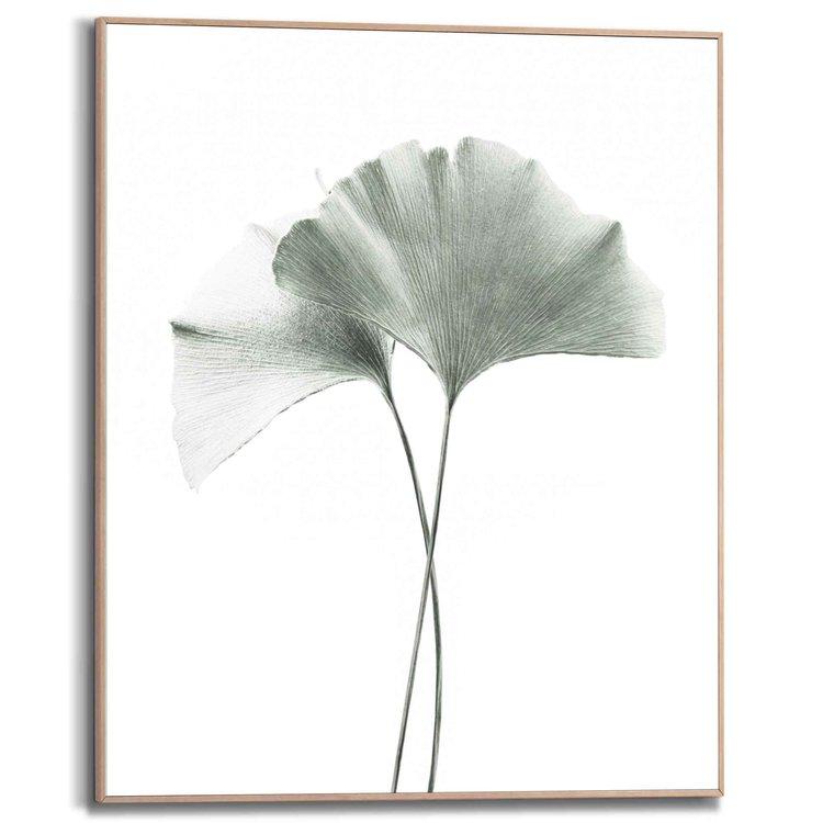 Tempelboom blad Japanse notenboom - China - Kegel - Ginkgo - Schilderij Slim Frame MDF 40 x 50 cm