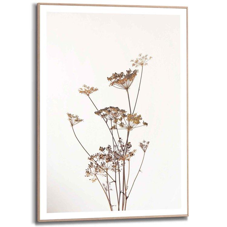 Berenklauw Natuur - Plant - Gedroogd - Bloemen - Schilderij Slim Frame MDF 50 x 70 cm