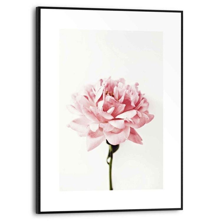 Roos Bloemen - Natuur - Romantisch - Schilderij Slim Frame MDF 30 x 40 cm