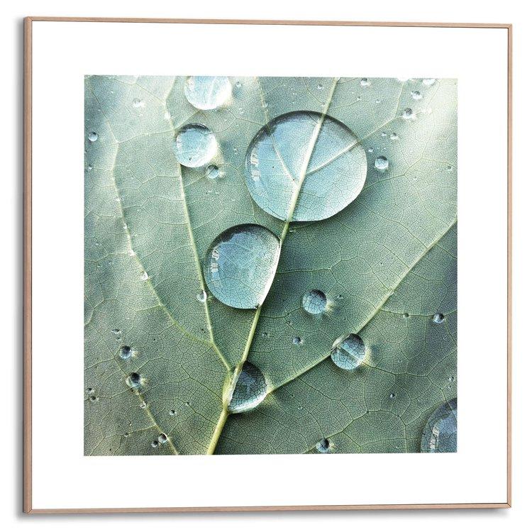 Dauwdruppels Close-up - Blad - Plant - Natuur - Schilderij Slim Frame MDF 50 x 50 cm