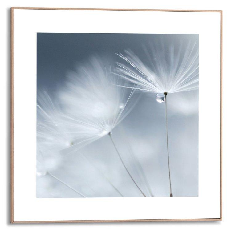 Paardenbloem dauw Bloemen - Dauwdruppel - Close-up - Schilderij Slim Frame MDF 50 x 50 cm