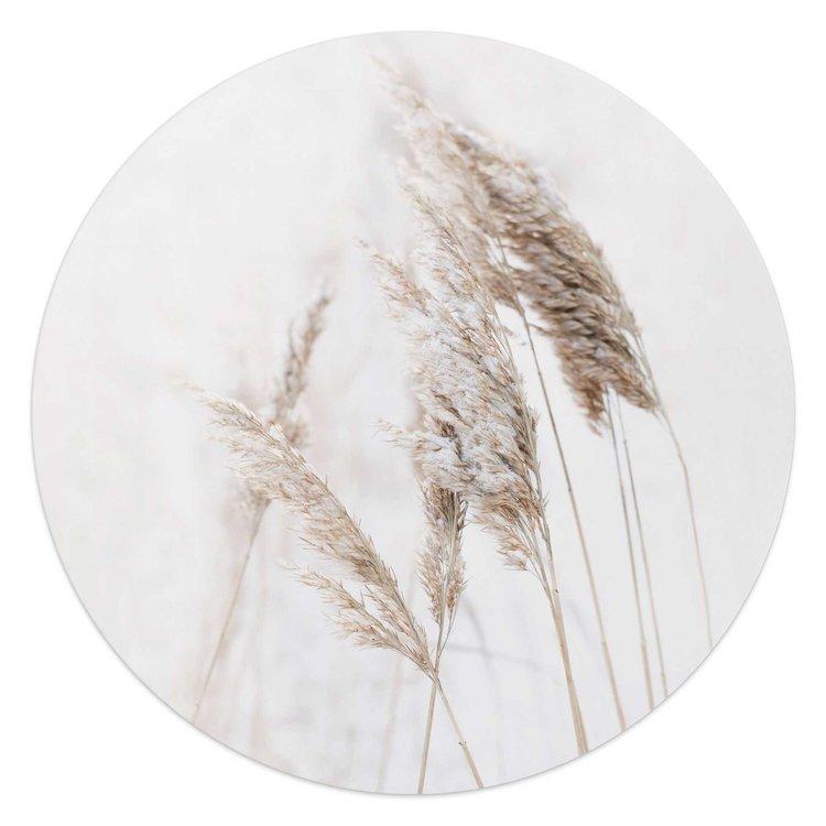 Pampasgras Planten - Natuur - Glasschilderij rond Glas
