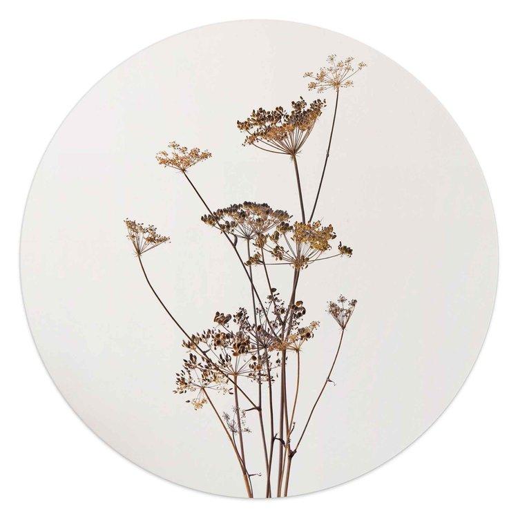 Bereklauw  Natuur - Plant - Gedroogd - Bloemen - Glasschilderij rond Glas