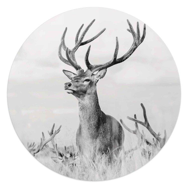 Trots hert Natuur - Hertengewei - Fotografie - Glasschilderij rond Glas