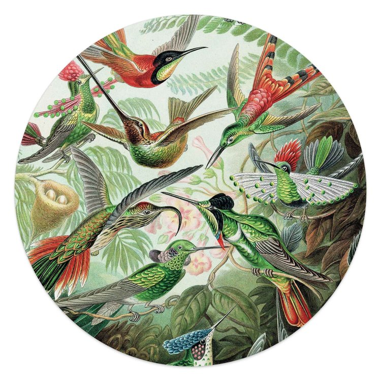 Hummingbirds Kolibrie - Vogels - Natuur - Botanisch - Glasschilderij rond Glas