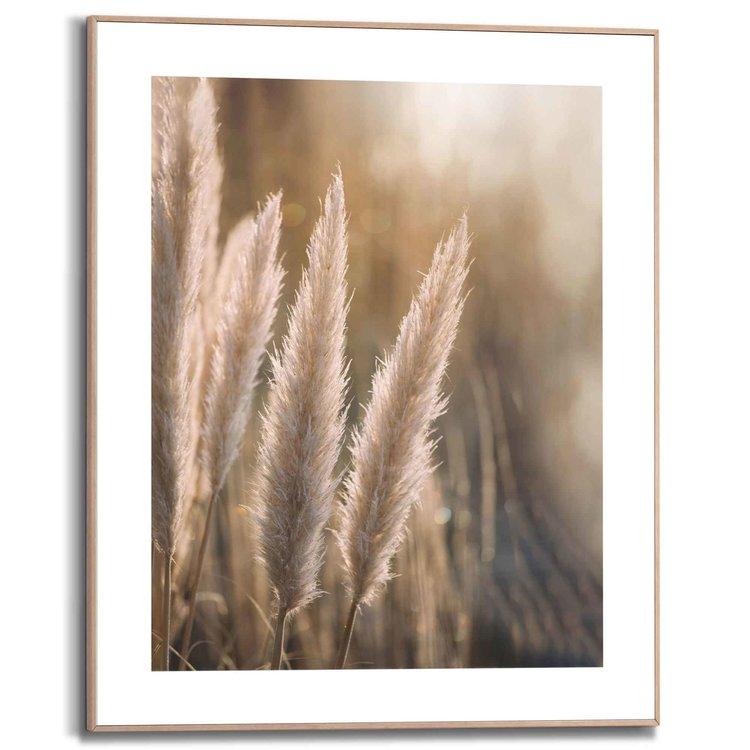 Pampas Pluimen - Natuur - Planten  - Schilderij Slim Frame 40 x 50 cm MDF