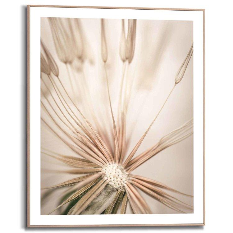 Paardenbloem Close up - Blaasbloem - Natuur  - Schilderij Slim Frame 40 x 50 cm MDF