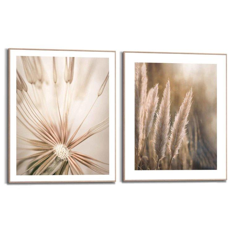 Natuur Botanisch - Pampas - Paardebloem - Close-up - Set van 2 schilderijen  Hout