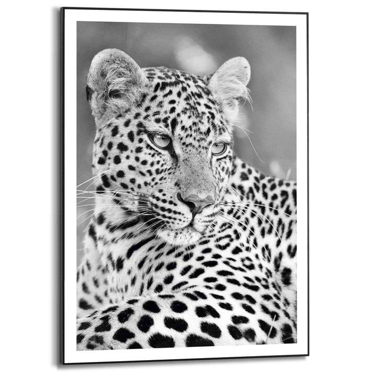 Luipaard Zuid Afrika - Safari - Gevlekt - Katachtigen  - Schilderij Slim Frame 50 x 70 cm MDF