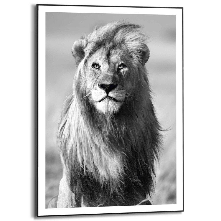 Leeuw Serengeti National Park - Tanzania - Wilde dieren - Manen  - Schilderij Slim Frame 50 x 70 cm MDF
