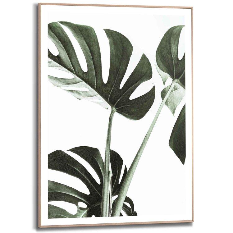 Monstera Gatenplant - Blad - Botanisch - Natuur - Schilderij Slim Frame 50 x 70 cm MDF