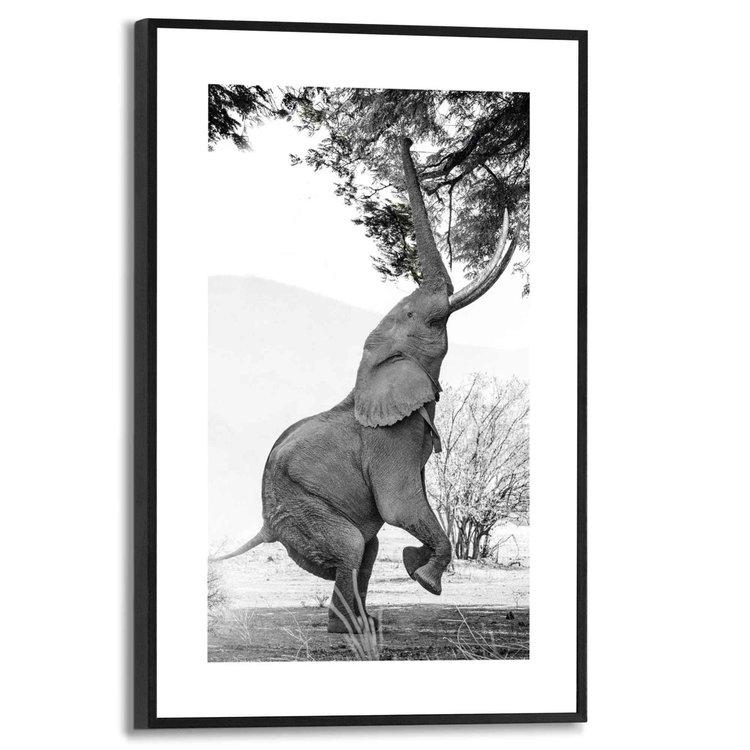 Afrikaanse Olifant Mana Pools - Zimbabwe - Balans  - Schilderij Slim Frame 20 x 30 cm MDF