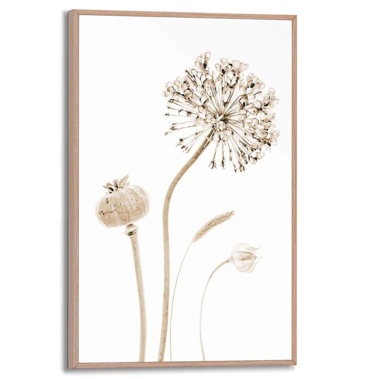 Droogbloemen  Papaver - Allium - Plant - Schilderij Slim Frame 20 x 30 cm MDF